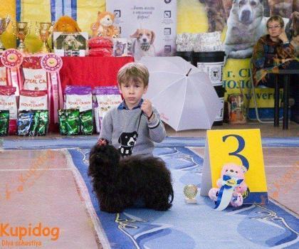 Конкурс Ребенок и собака